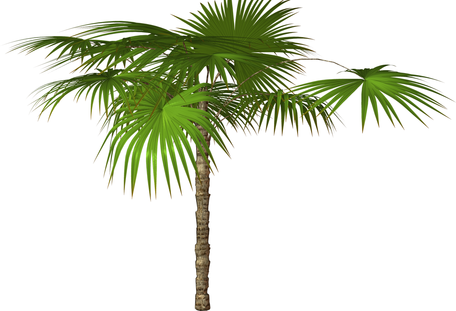 Real palm tree with christmas ornaments png free. Transparent pictures icons and