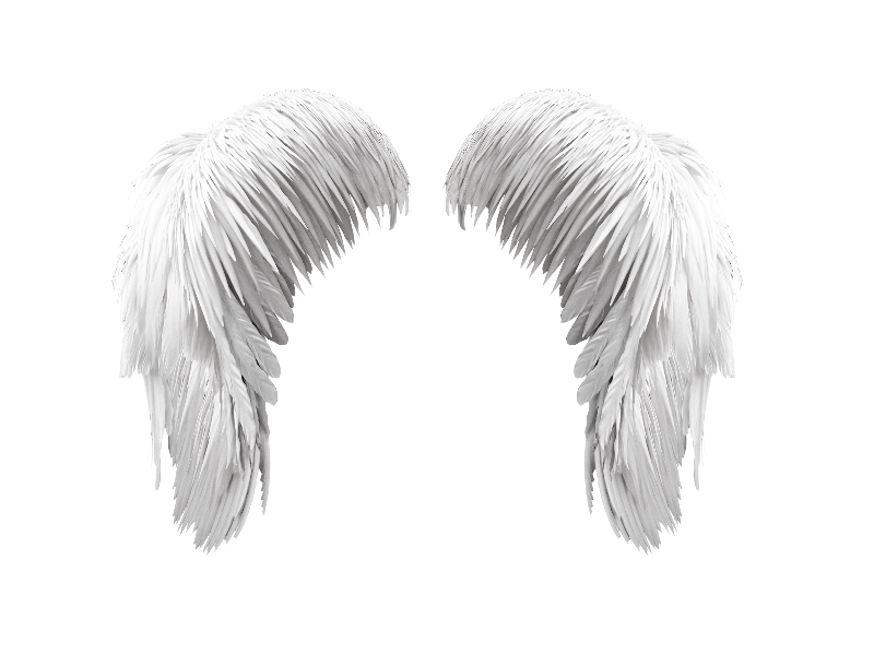 Transparent feathers falling angel. Free white wings png