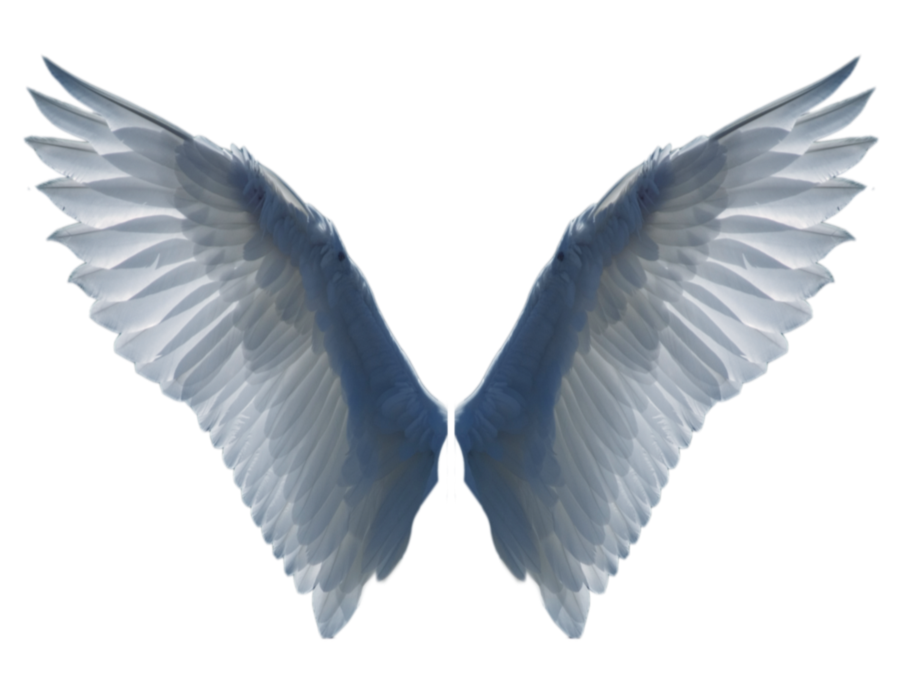 Realistic angel wings png. By evelivesey deviantart com