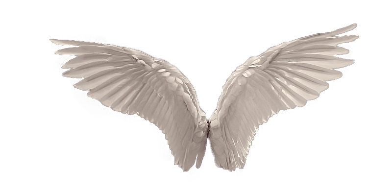 Realistic angel wings png. Favourites by elfablu on