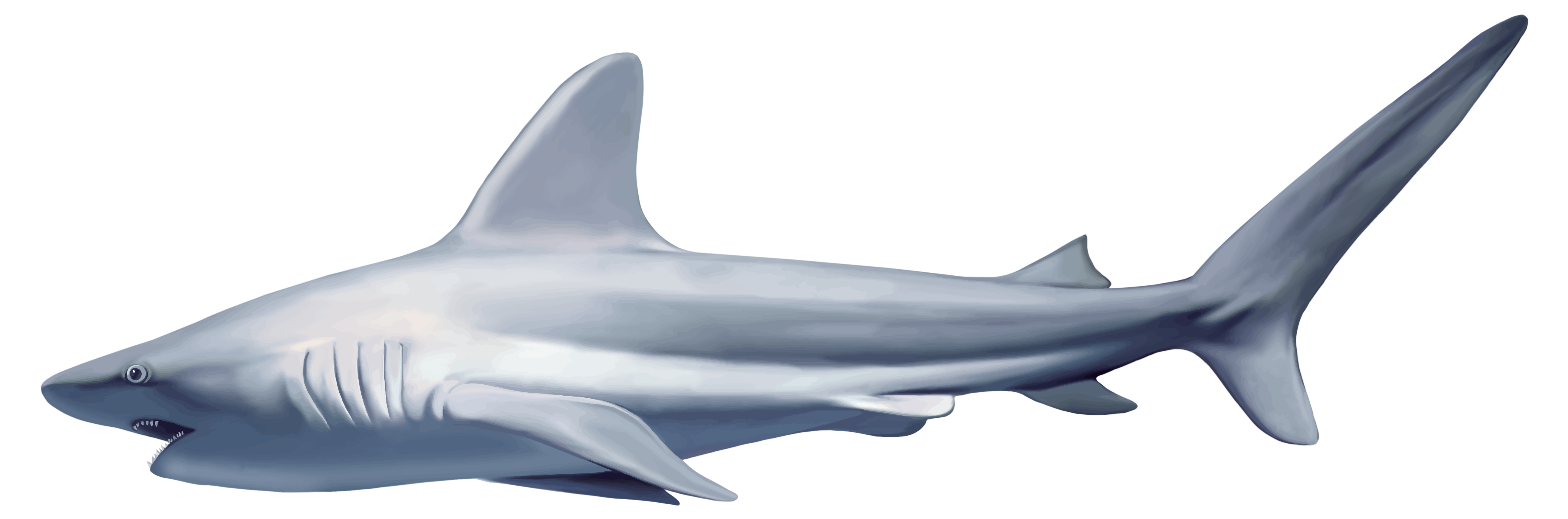 shark clipart small shark