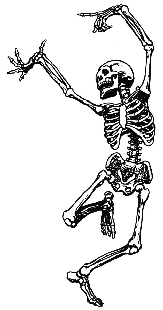 Realistic clipart skeleton. Phil wade s course clip art library library