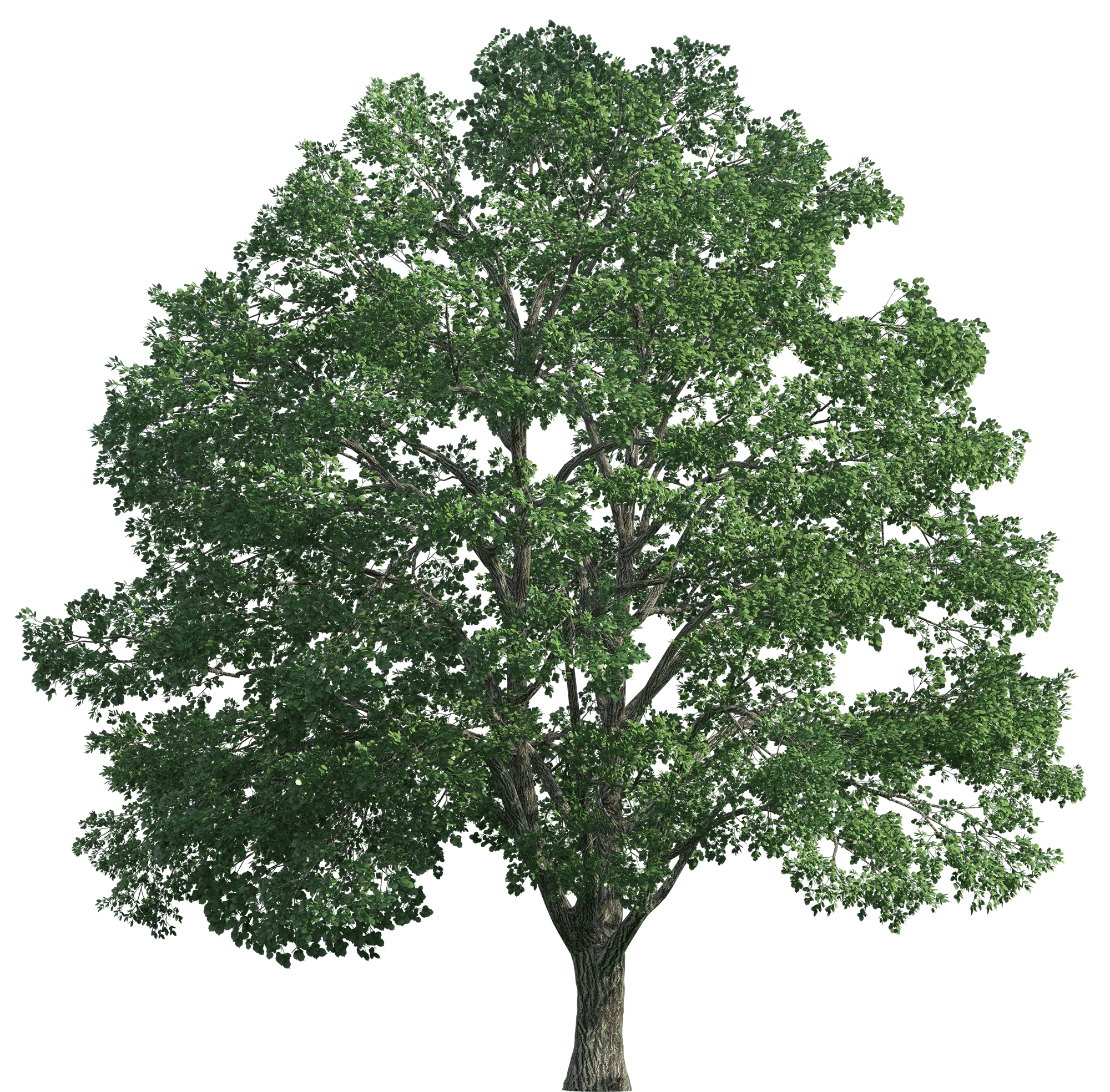 oak trees png