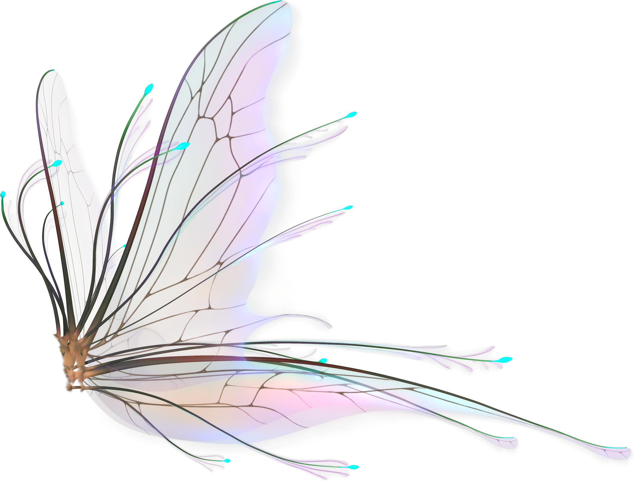 Realistic fairy wings png. Bing images faeries pinterest