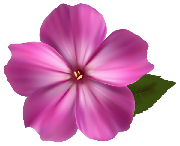 Realistic flower png. Pink clipart image flowers