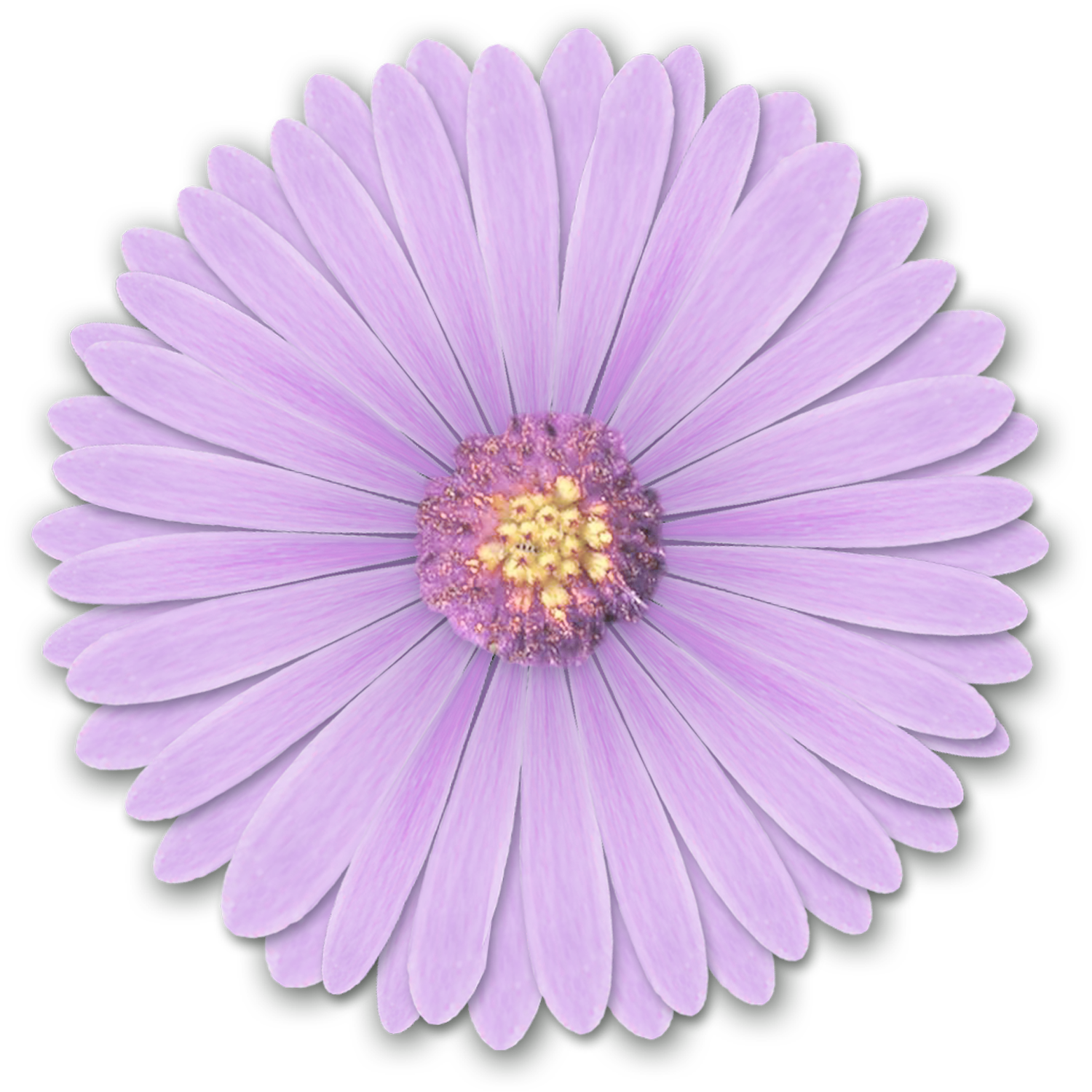Realistic flower png. Res light purple flowers