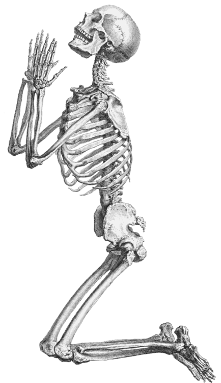 Skeletons Drawing Full Body Transparent Png Clipart Free Download