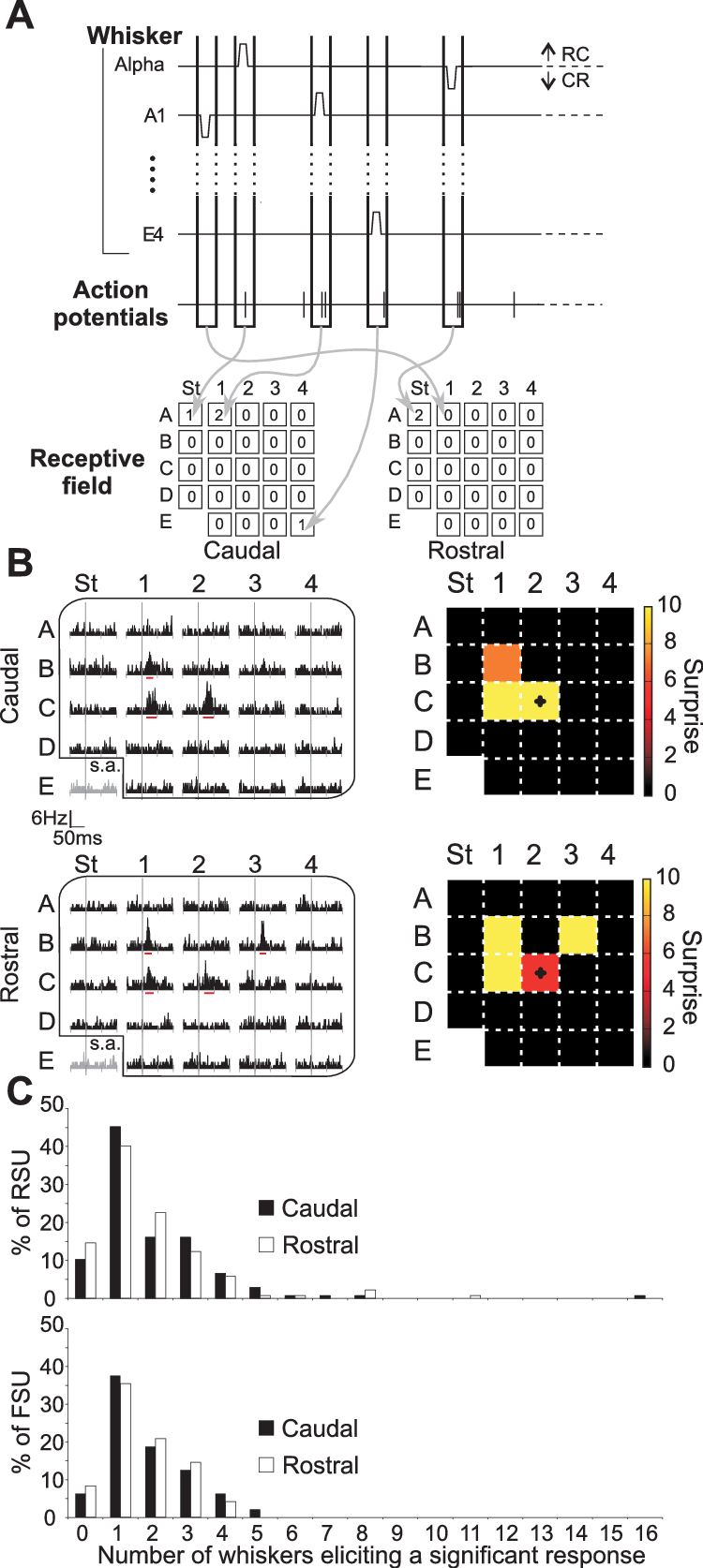 receptive drawing schematic