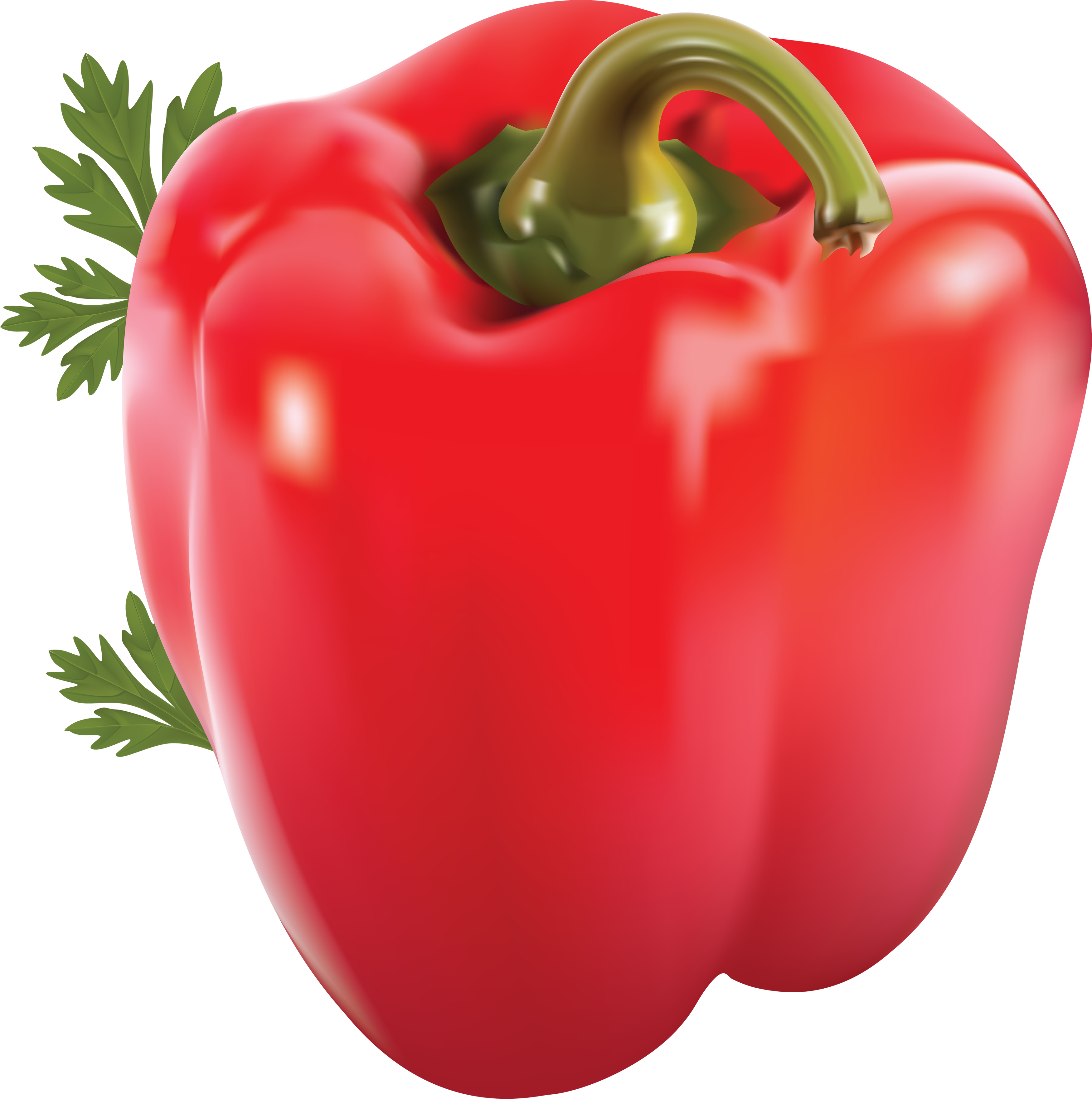 Red bell pepper png. Image purepng free transparent