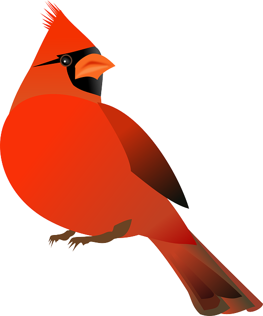 Red bird ornaments png. Free image on pixabay