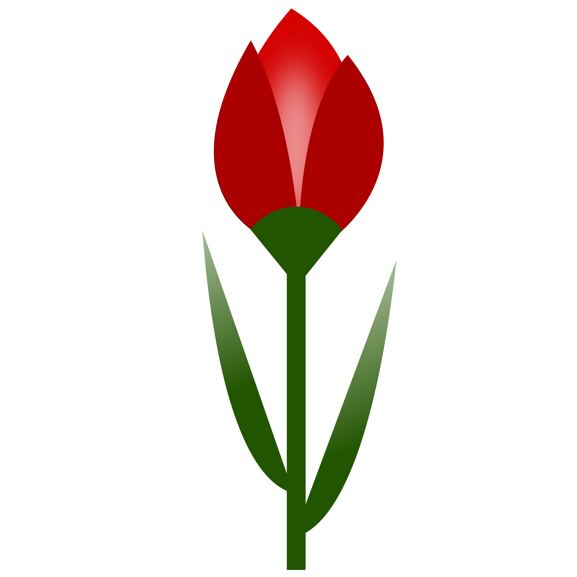 Red color png. Tulip simple flower with