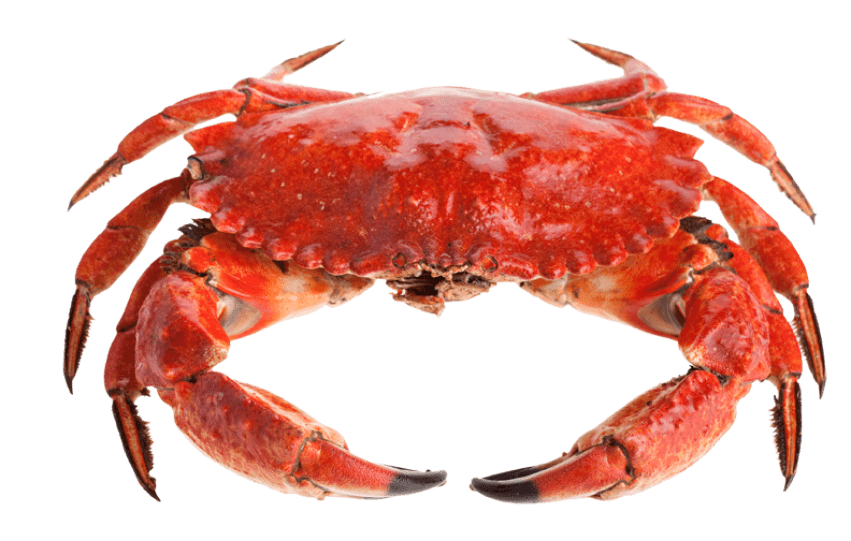 Red crab png. Cute free images toppng
