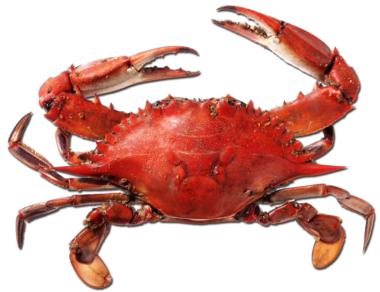 Red crab png. Where i go pharrell