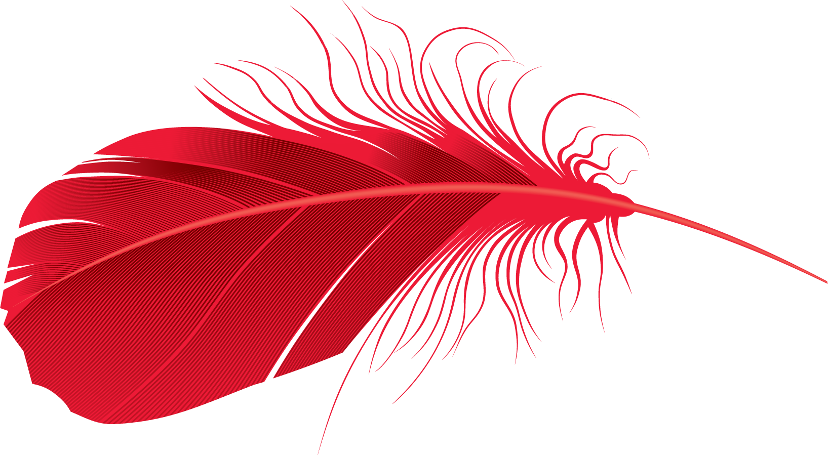 Red feather png. Images free download