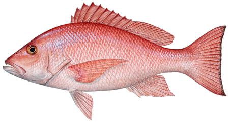 Image free download. Red fish png royalty free library