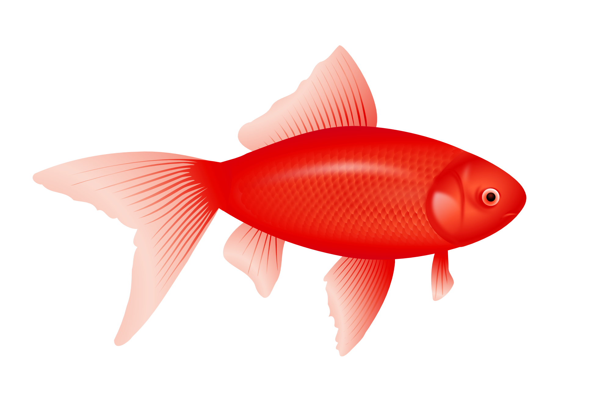 red fish png
