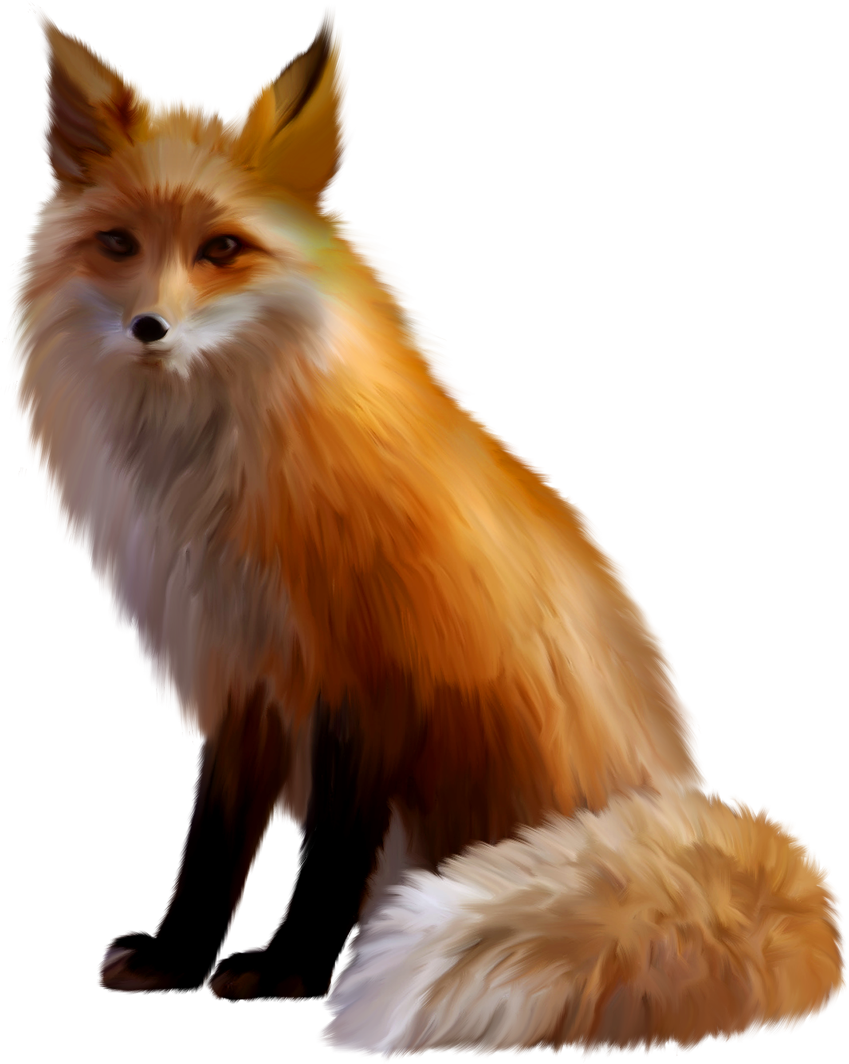 Fox png. Red photo arts