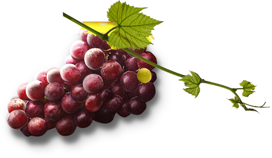 Red grapes png. Grape image free picture