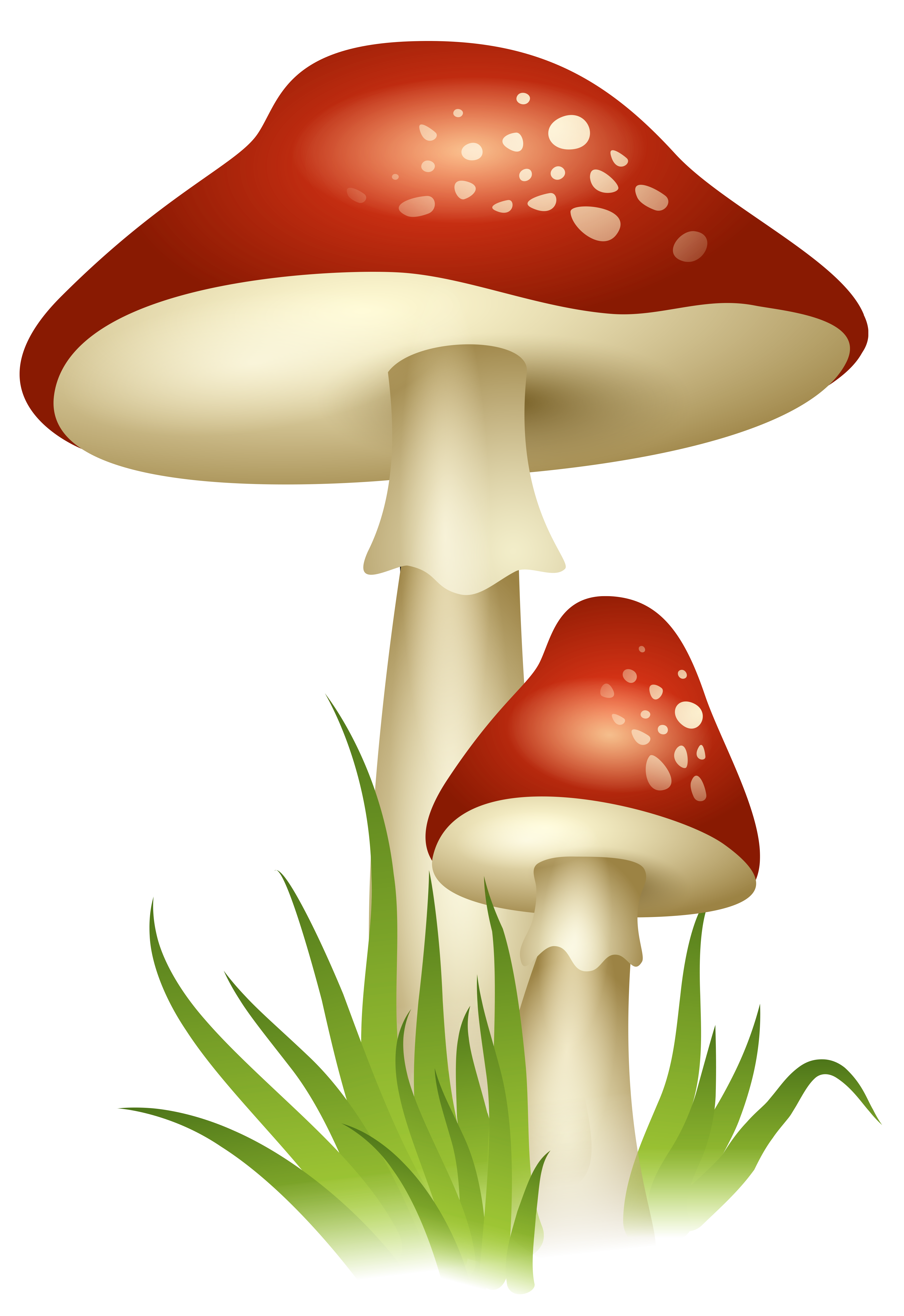 Red mushroom png. Mushrooms transparent picture gallery