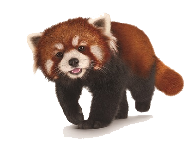 Red panda face png. Transparent images pluspng download