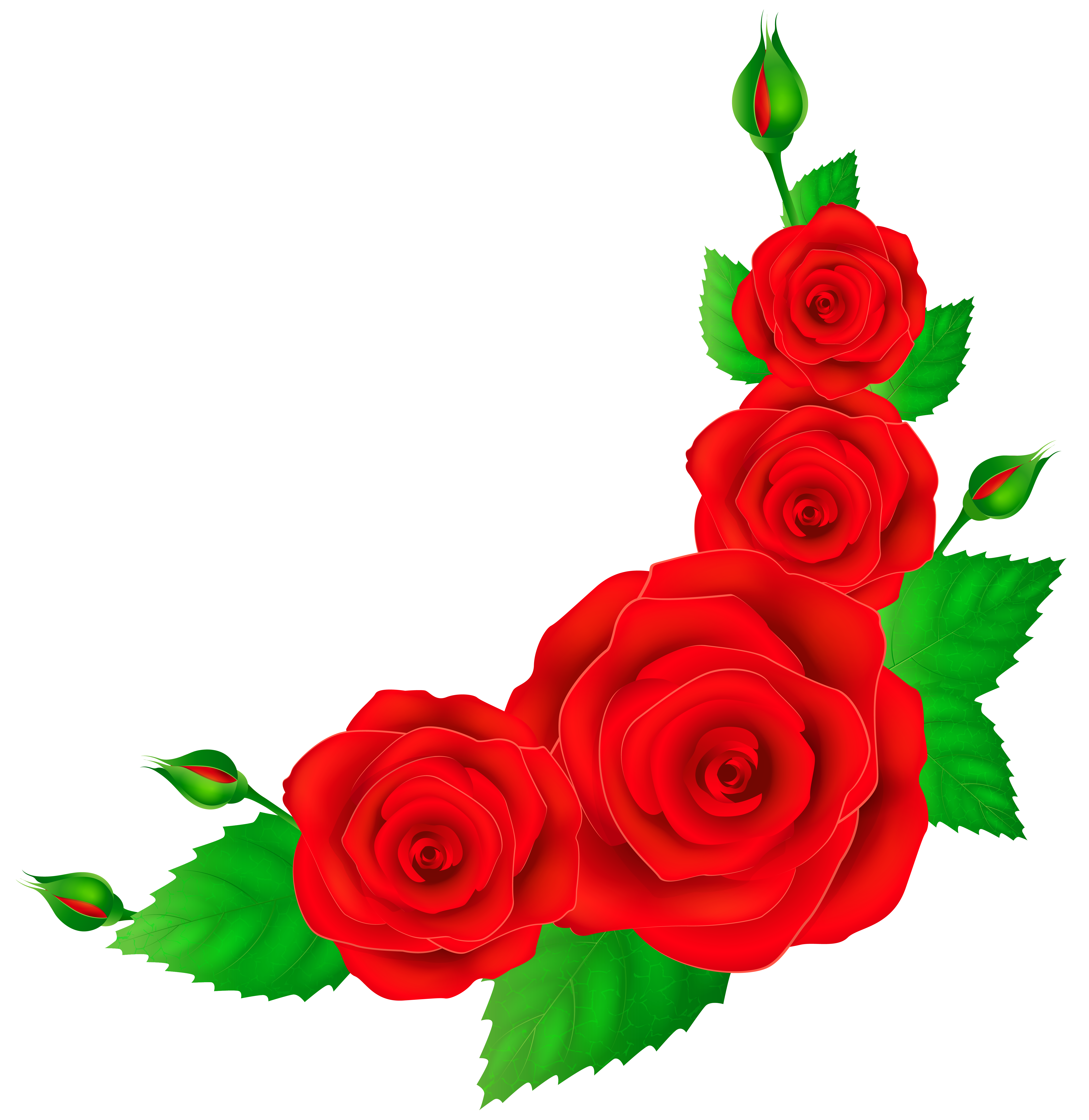 Red rose border png. Collection of clipart