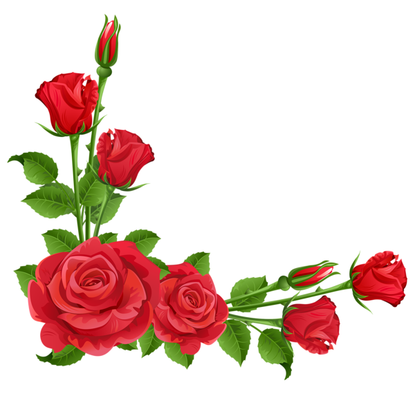 Red rose border png. Roses transparent clipart boarders