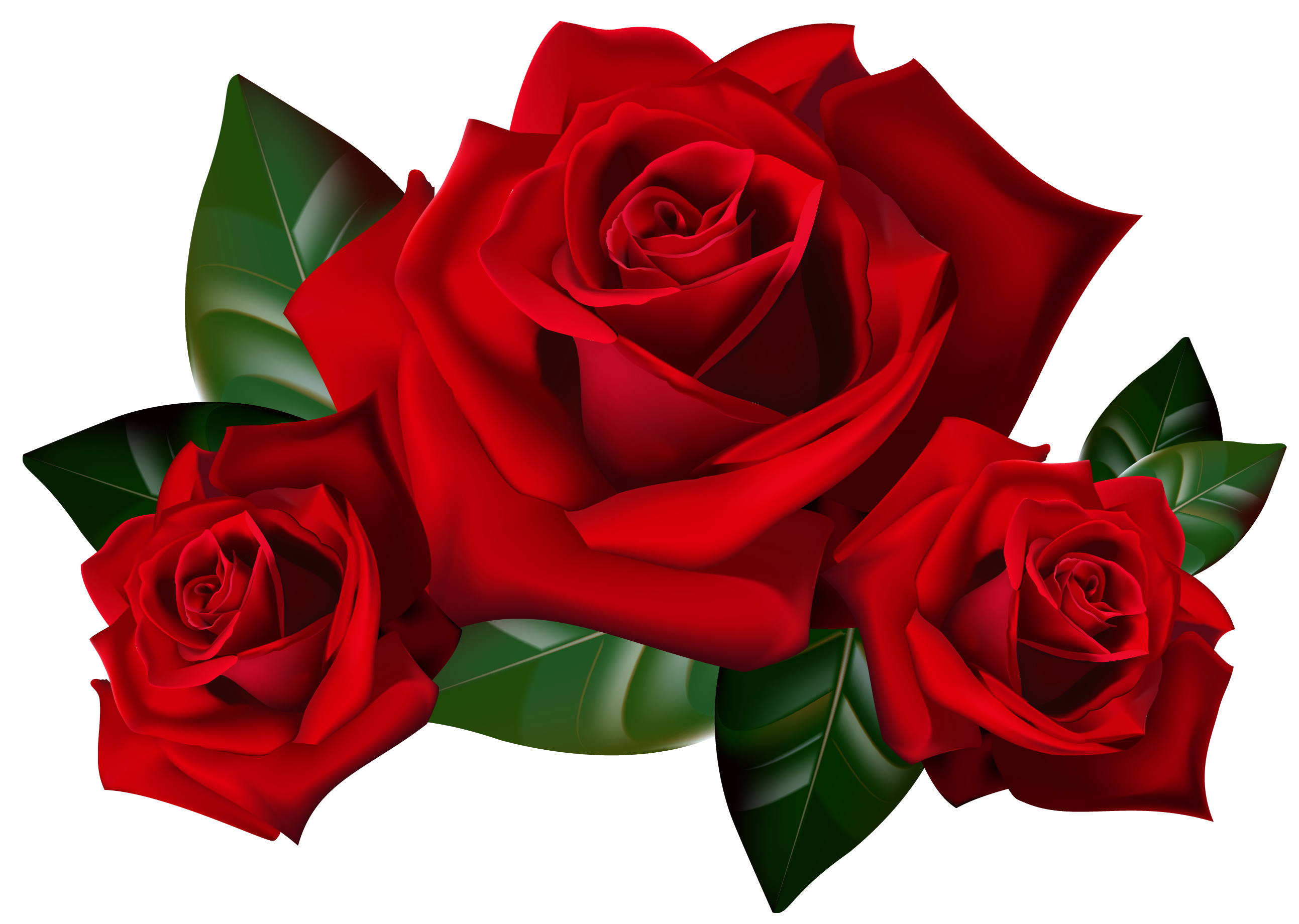 Red rose flower png. Roses clipart picture gallery