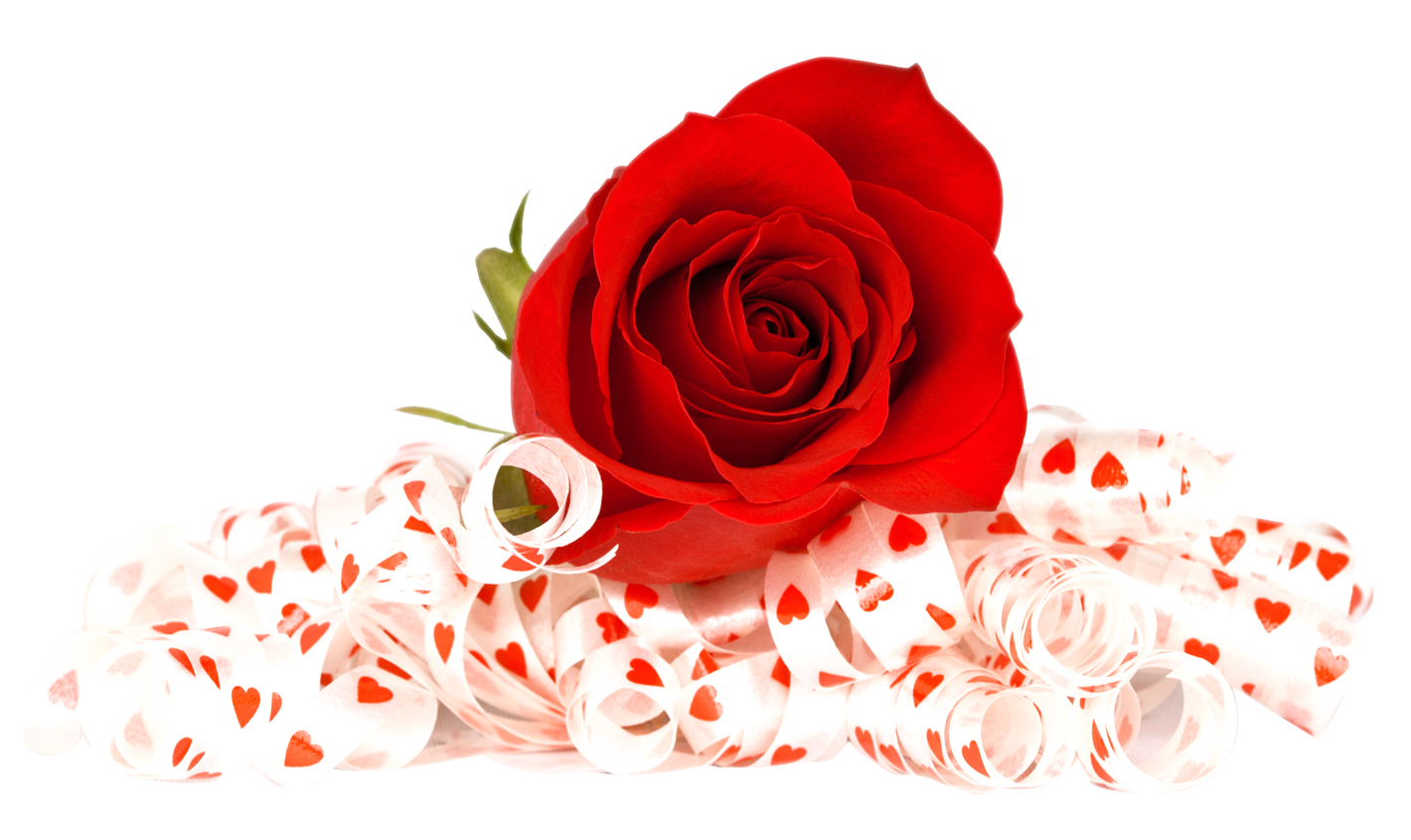 Red rose flower png. Image purepng free transparent