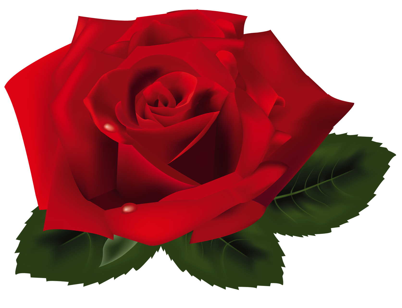 Red rose png. Clipart gallery yopriceville high