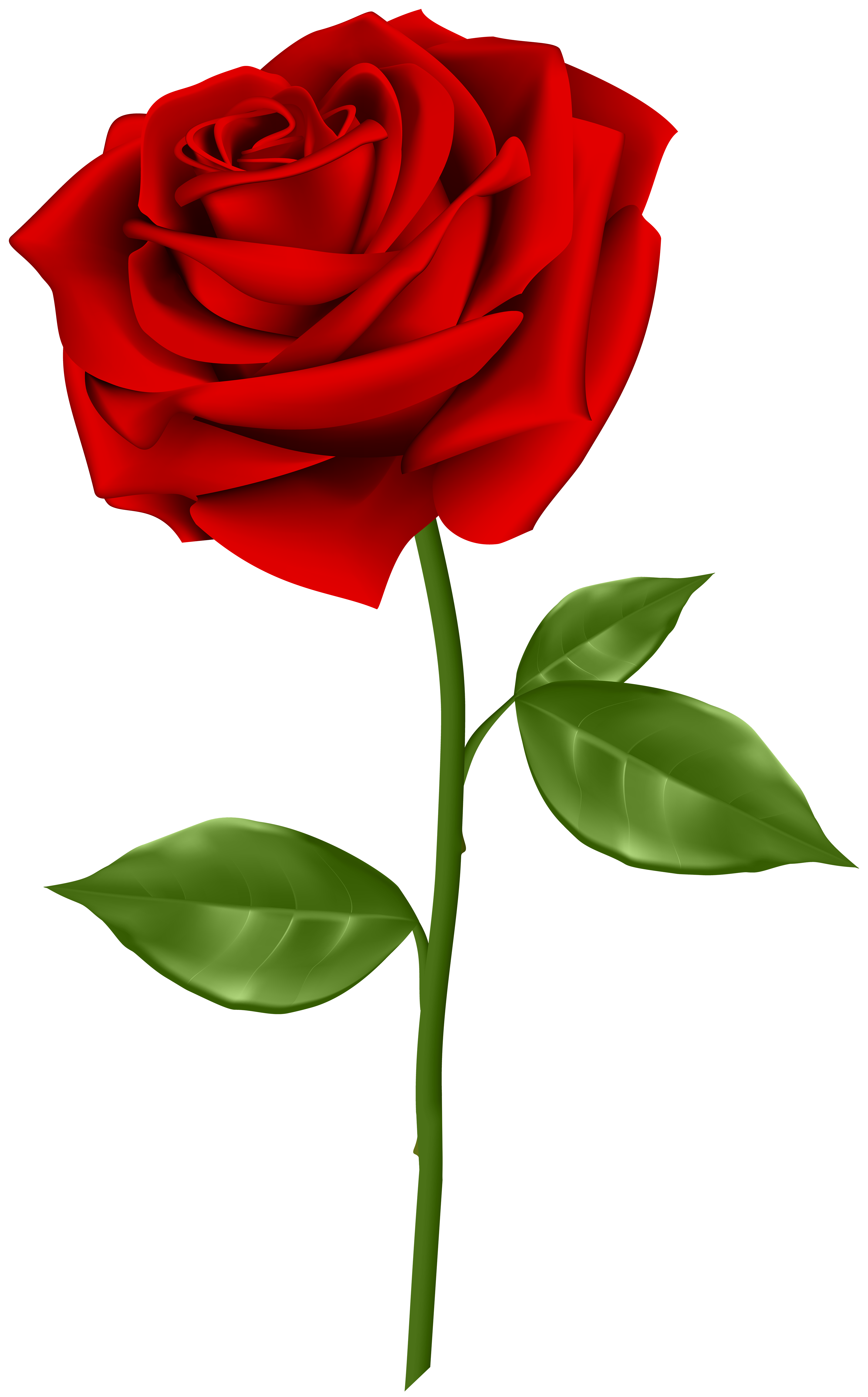 Red rose png. Transparent clip art gallery