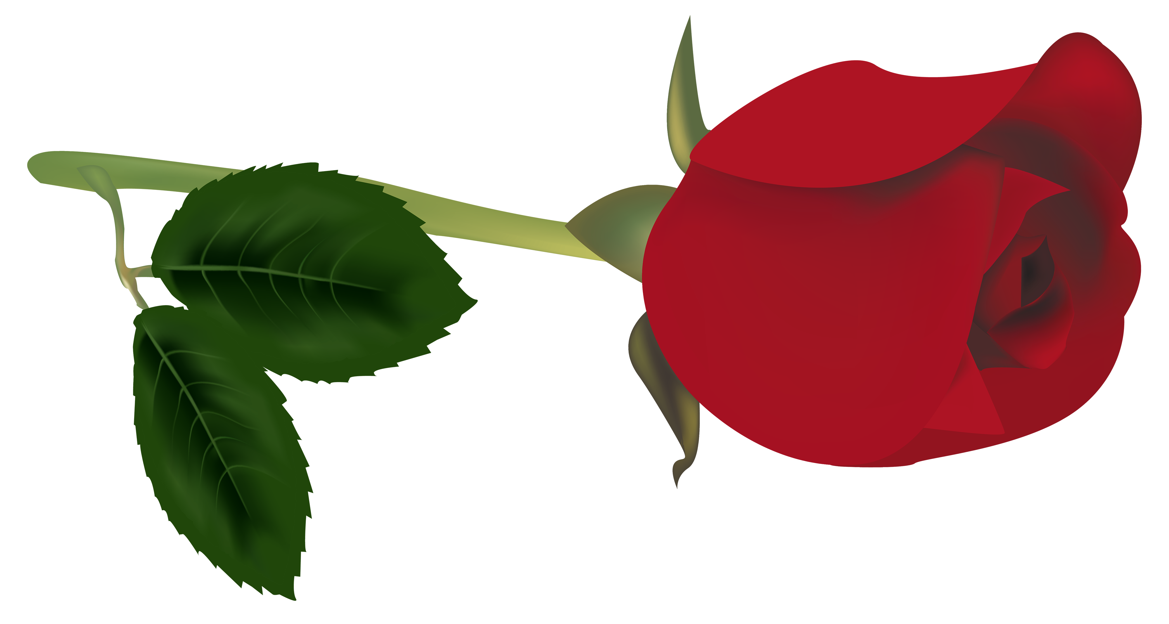 rose bud png