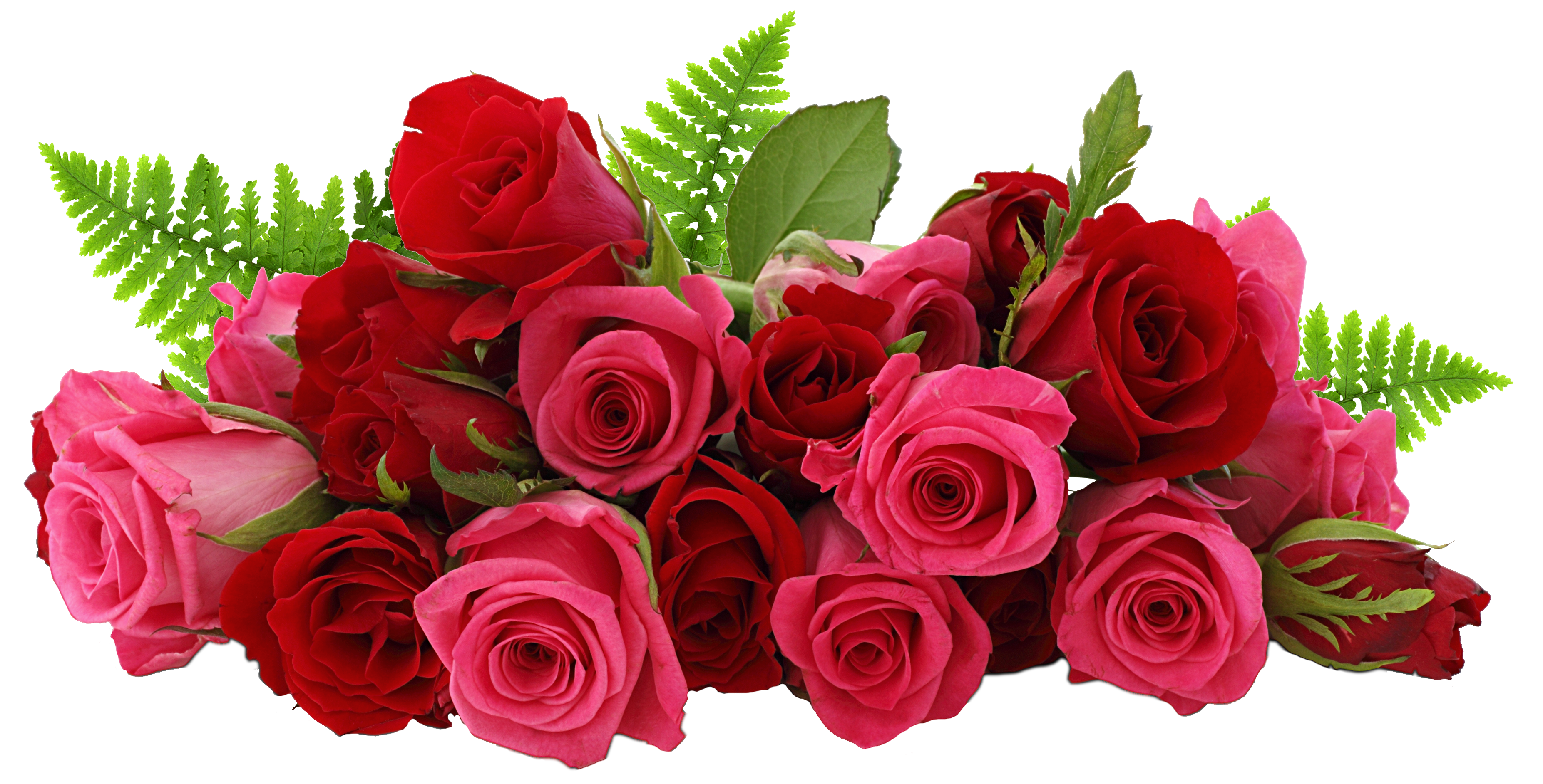 Red and pink picture. Roses png svg free library