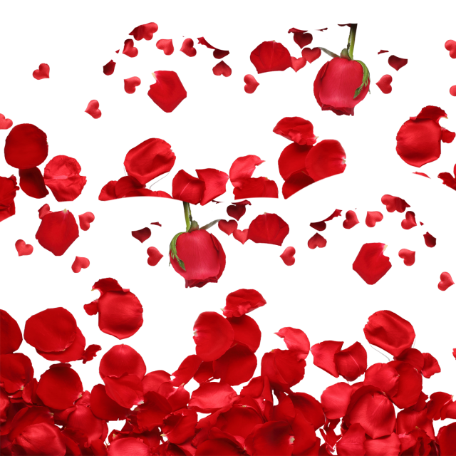Red roses png. Rose petals and psd