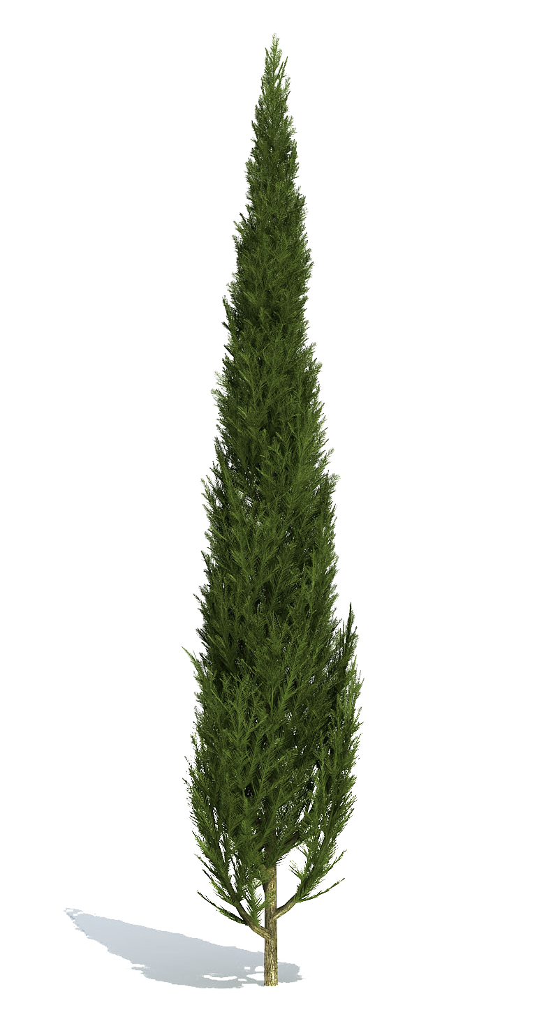 Vector psd tree. Cutout plant shrub forps