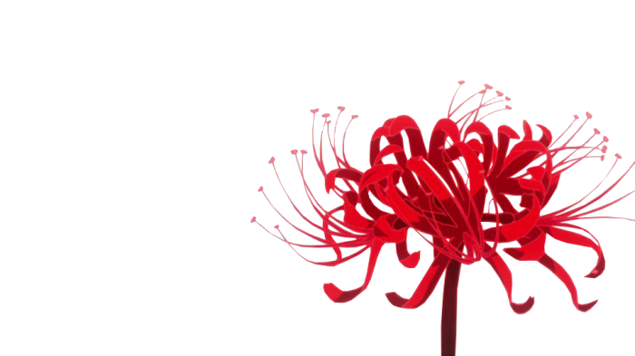 Red spider lily png. Tokyo ghoul flower rat