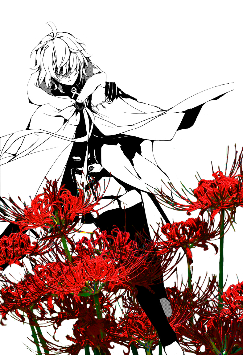 Red spider lily png. Have you seen my
