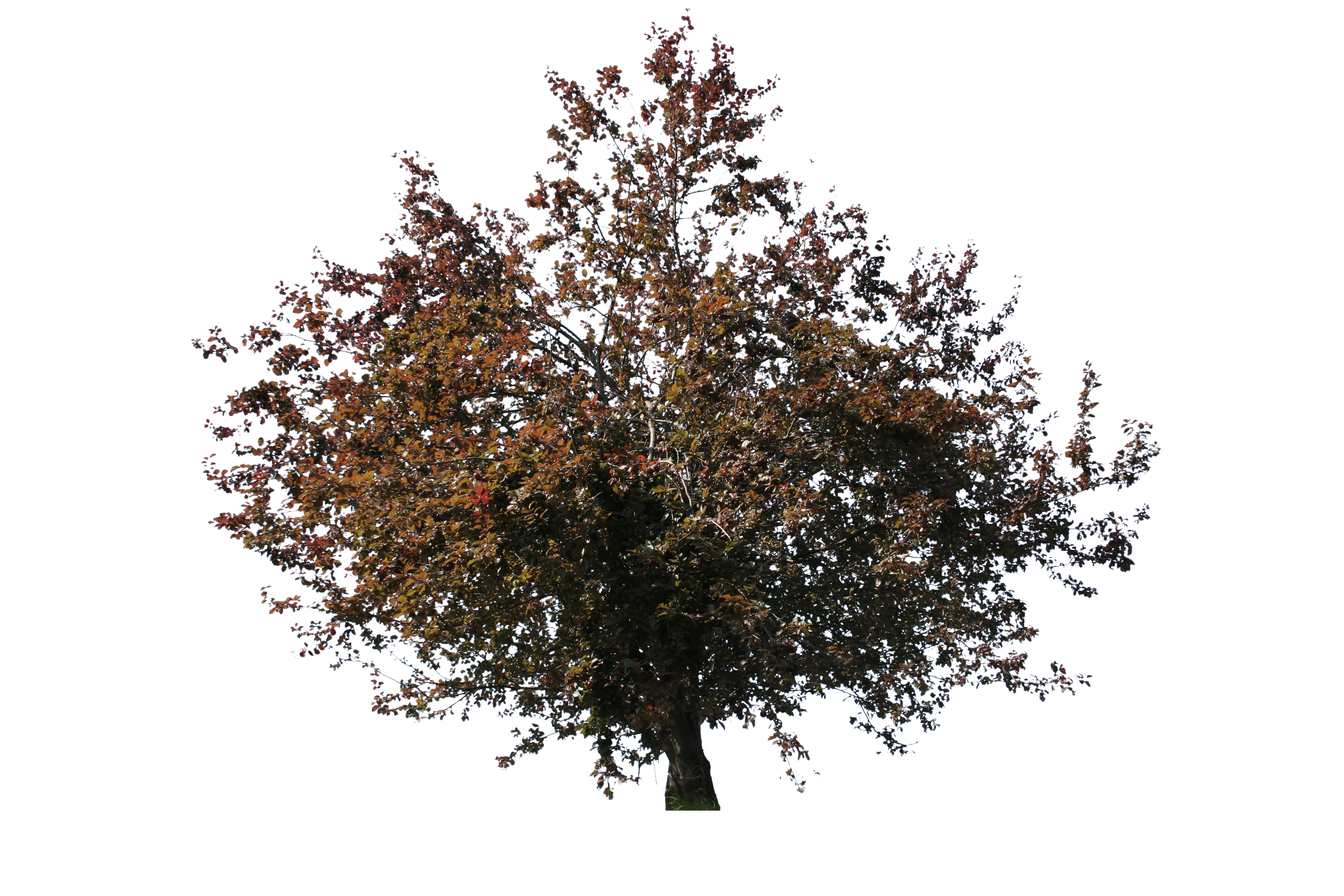 Red tree png. Small free cut out