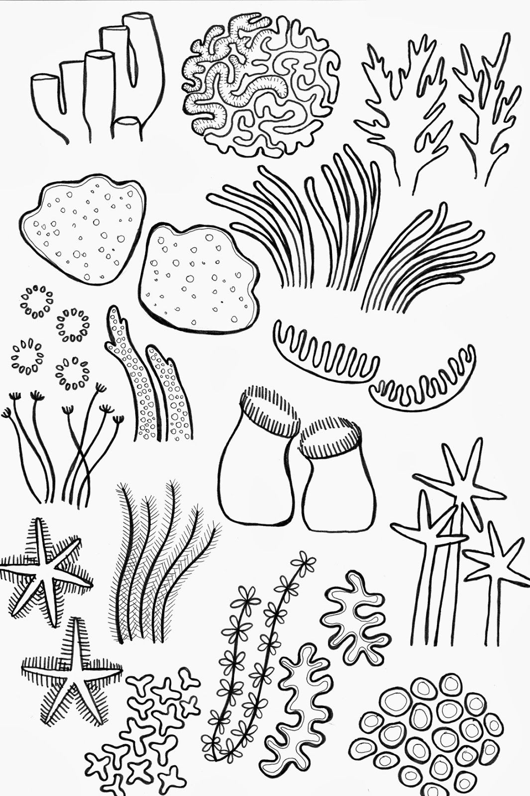 Reef clipart sketch. Drawing underwater coral by