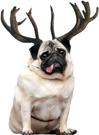 Reindeer antlers png tumblr. Download hd fat and