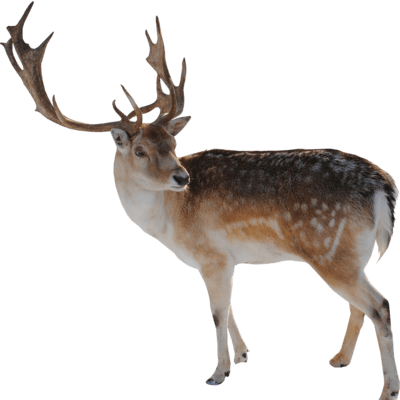 Hq transparent images pluspng. Reindeer antlers png tumblr image black and white