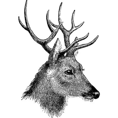 Reindeer black antlers png picture. Vintage deer head transparent