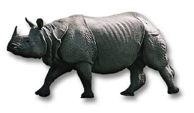 Rhinos drawing one horned rhino. Facts and species pages