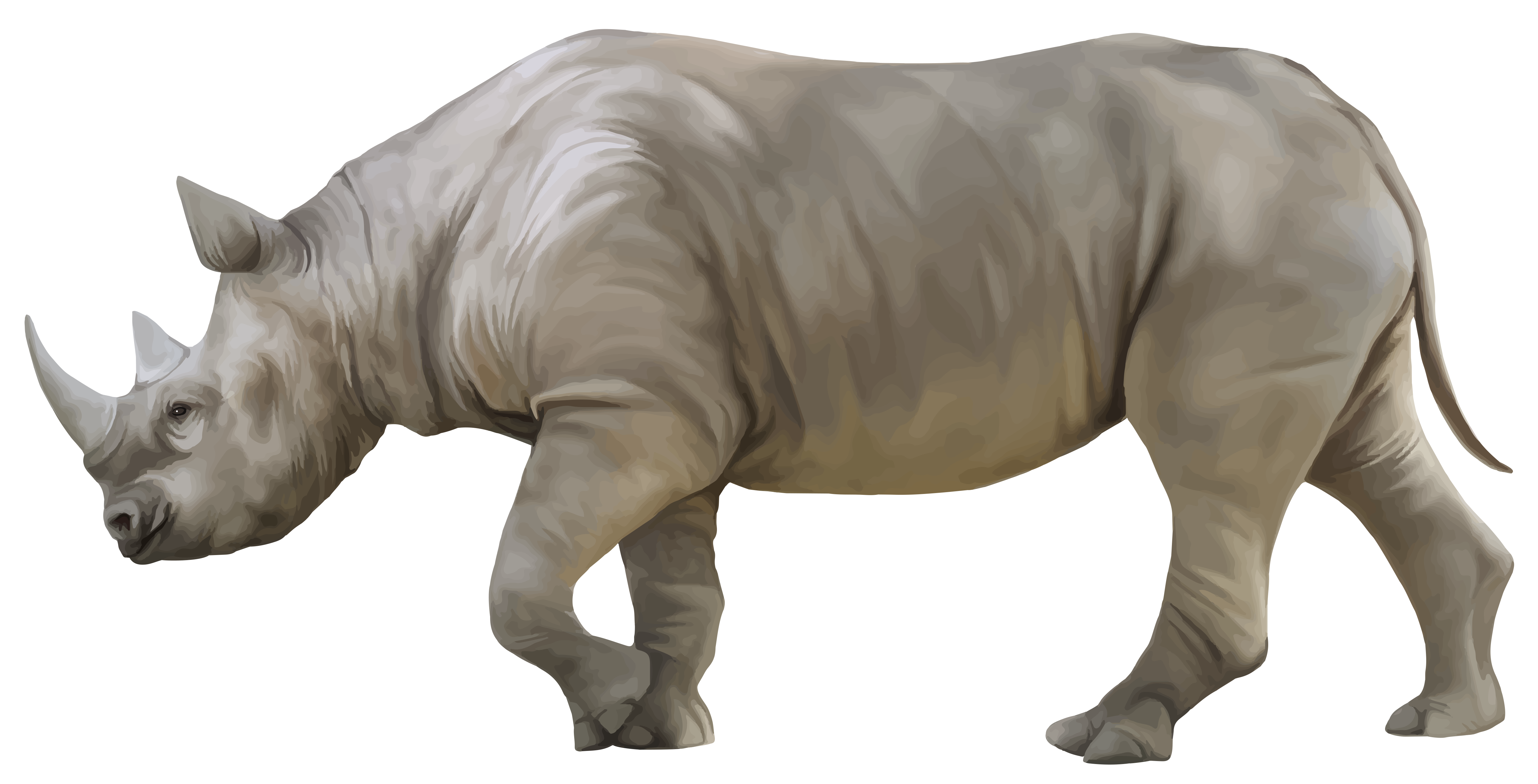 Rhino clipart real. Png best web