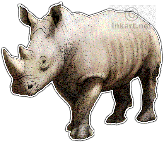 Rhinos drawing animal. Wildlife art decals white