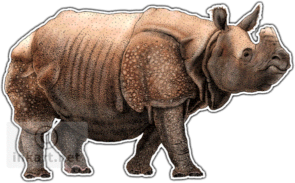 Rhinos drawing ink. Indian rhinoceros unicornis line