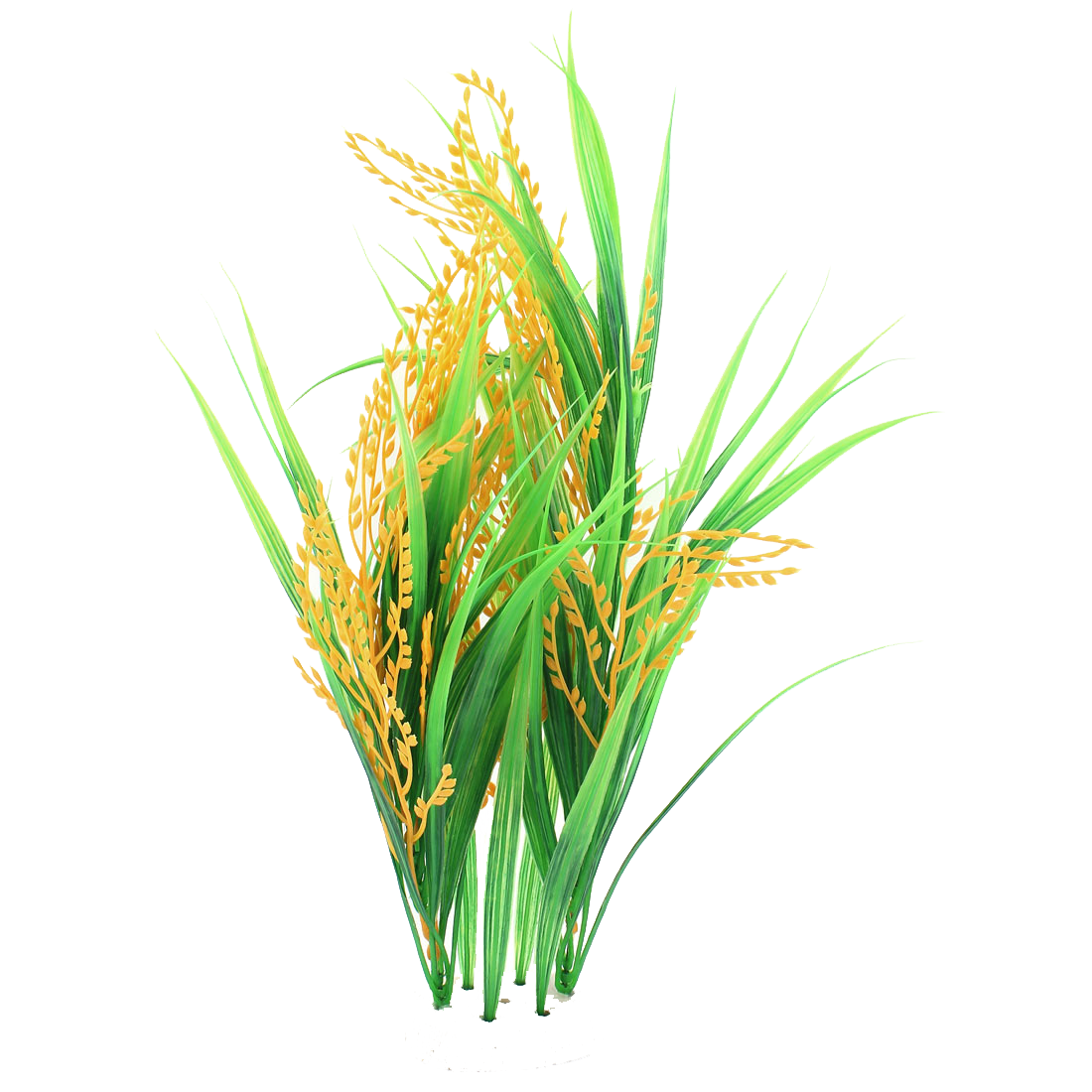 Rice plant png. Collection of crop