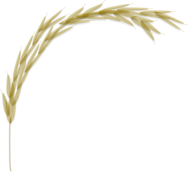 Rice crop png. Manually curated protein database