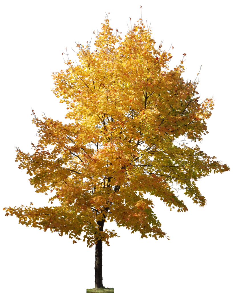 River clipart riviere. Arvore cutout tree psd