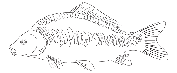 Roach drawing fish. Illustration coarse code date