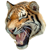 Roaring tiger png. Images of angry spacehero